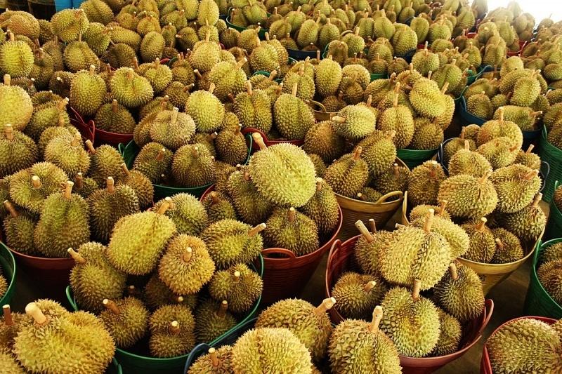 Golden durian