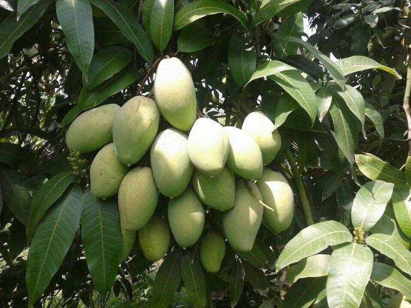 Mango bouquet