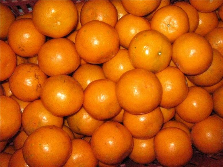 Orange Division